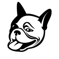bulldog-frances-03
